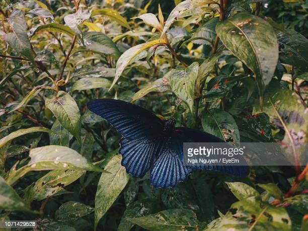 close-up of butterfly perching on plant - nga nguyen stock pictures, royalty-free photos & images