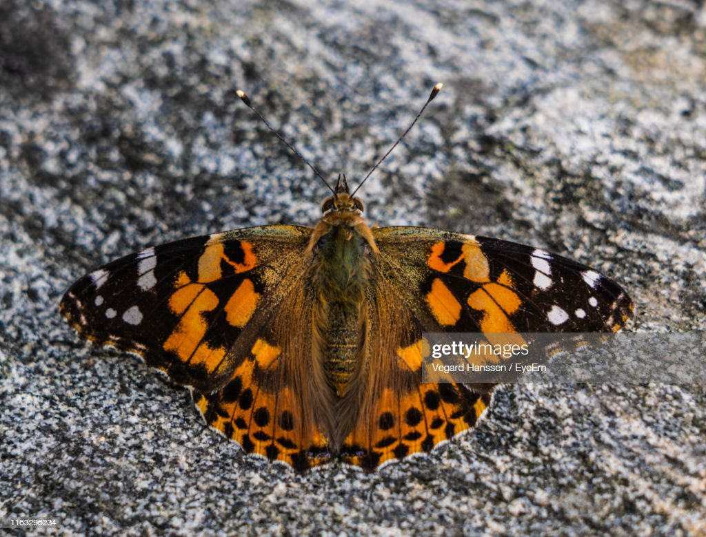 Close-Up Of Butterfly : Stock Photo