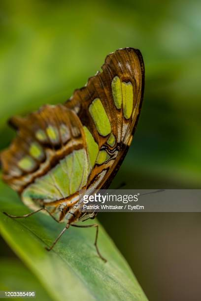 close-up of butterfly - coral springs stock pictures, royalty-free photos & images