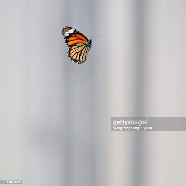 close-up of butterfly - 止まる ストックフォトと画像