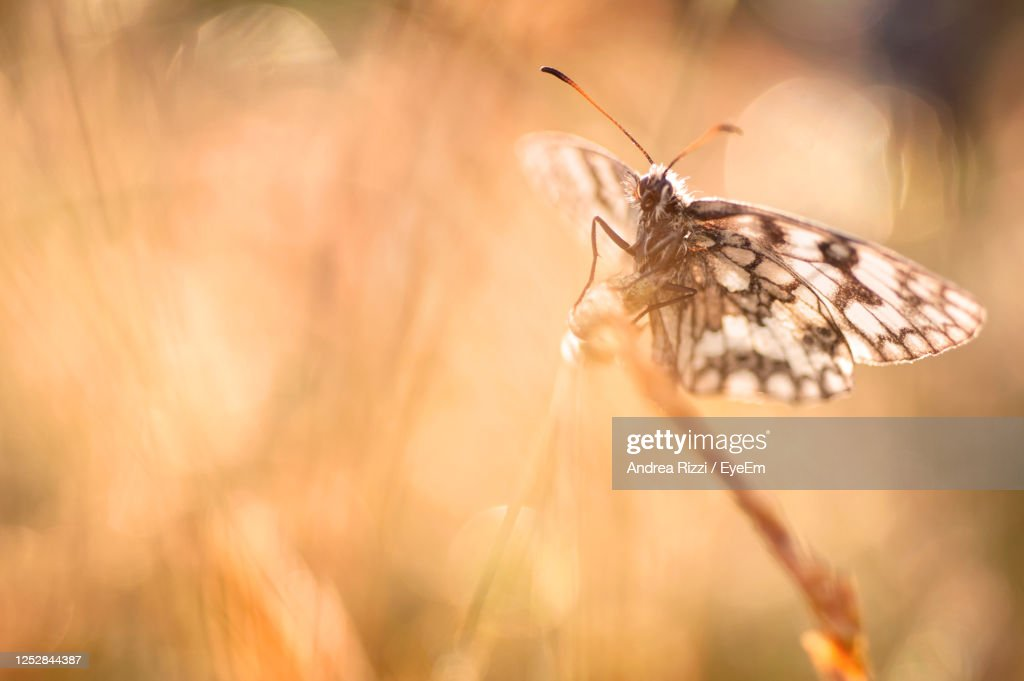 Close-Up Of Butterfly Pollinating Flower In  Spring : Foto stock