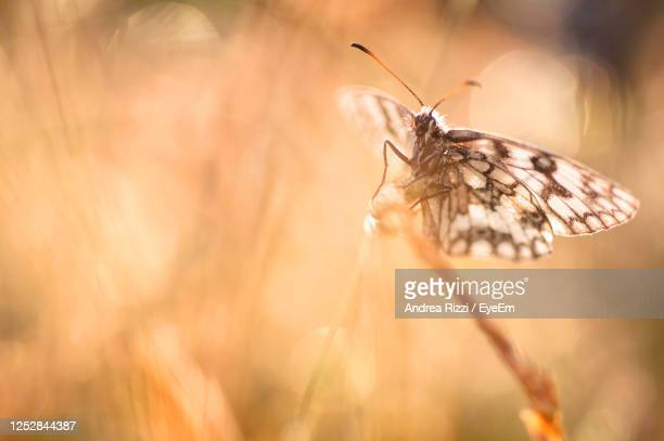 close-up of butterfly pollinating flower in  spring - andrea rizzi stockfoto's en -beelden
