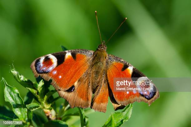close-up of butterfly pollinating flower - marek stefunko stock photos and pictures