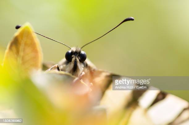 close-up of butterfly pollinating on flower in spring - andrea rizzi - fotografias e filmes do acervo