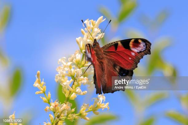 close-up of butterfly pollinating on flower - andre wilms eyeem stock-fotos und bilder