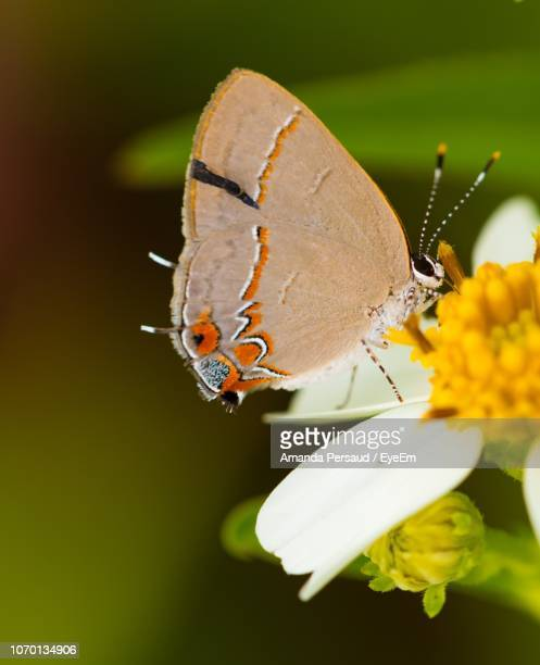 close-up of butterfly pollinating on flower - amanda and amanda stock pictures, royalty-free photos & images