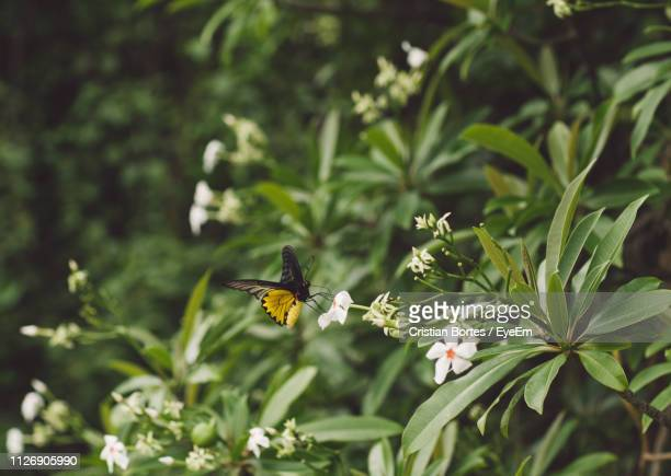 close-up of butterfly pollinating on flower - bortes foto e immagini stock