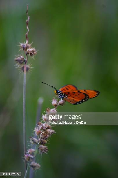 close-up of butterfly pollinating on flower - muhamad nasrun stock pictures, royalty-free photos & images