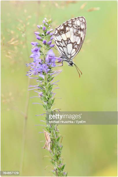 close-up of butterfly pollinating on flower - michael hruschka stock pictures, royalty-free photos & images
