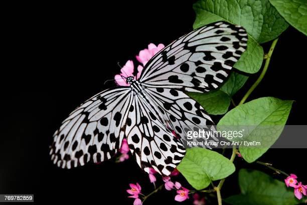 close-up of butterfly pollinating on flower - frische stockfoto's en -beelden