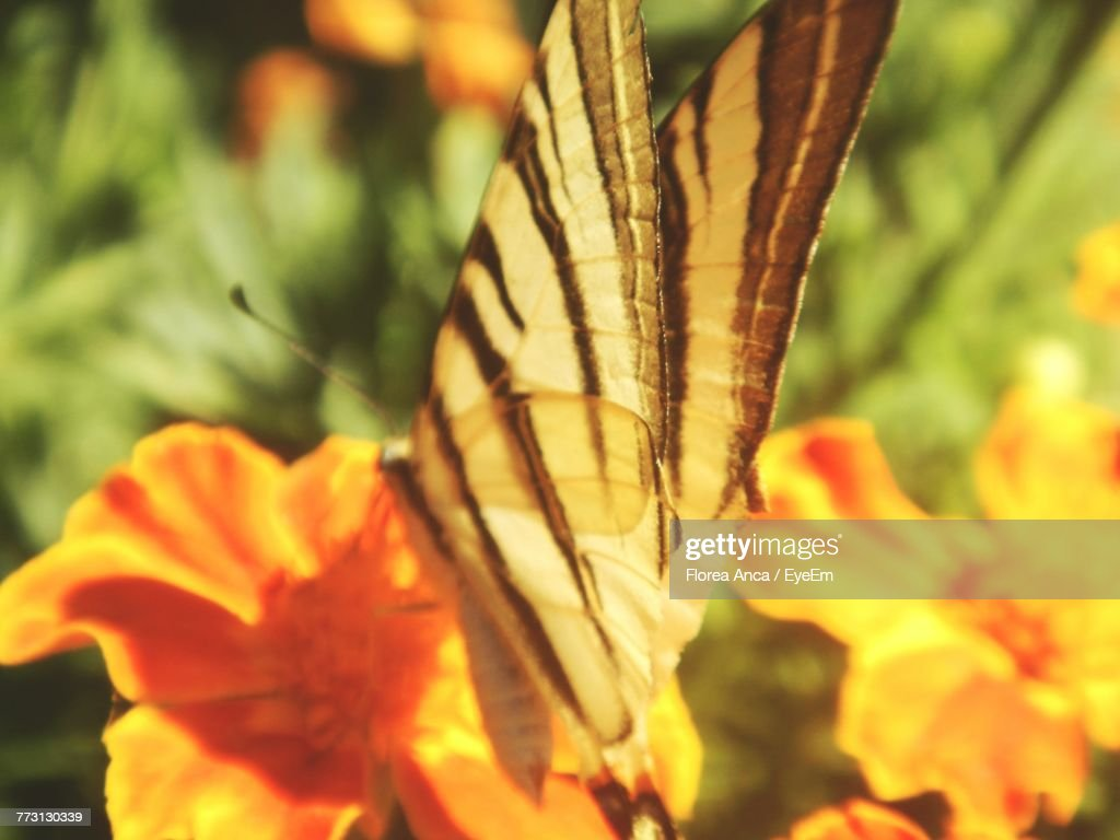 Close-Up Of Butterfly Pollinating On Flower : Photo