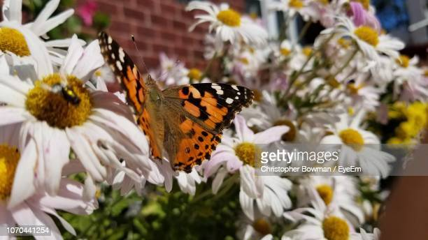 Close-Up Of Butterfly Pollinating On Flowers
