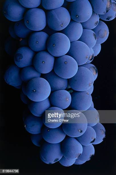 close-up of cabernet sauvignon grapes - cabernet sauvignon grape stock pictures, royalty-free photos & images