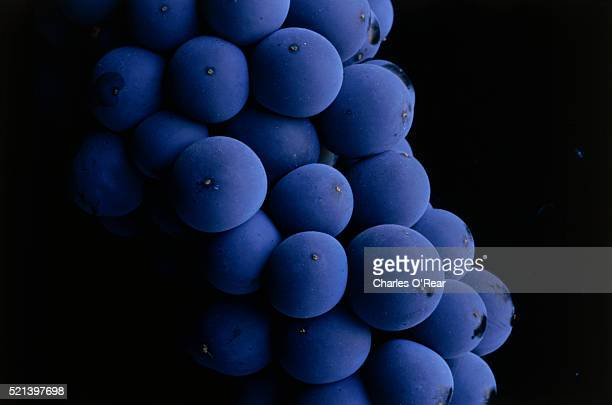 close-up of cabernet sauvignon grapes - uvas cabernet sauvignon - fotografias e filmes do acervo
