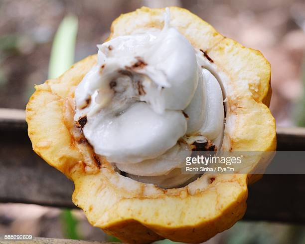 close-up of cacao fruit - theobroma imagens e fotografias de stock