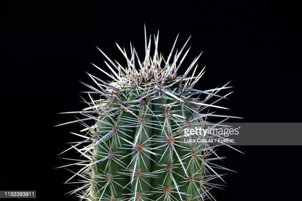 close-up of cactus against black background - sharp stock pictures, royalty-free photos & images