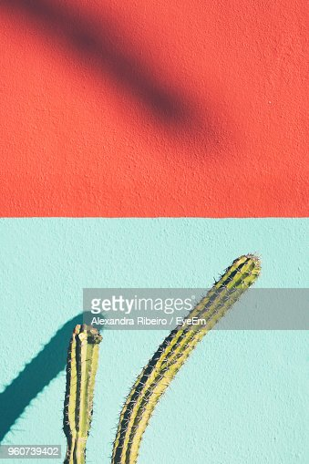 Close-Up Of Cactus Against Wall