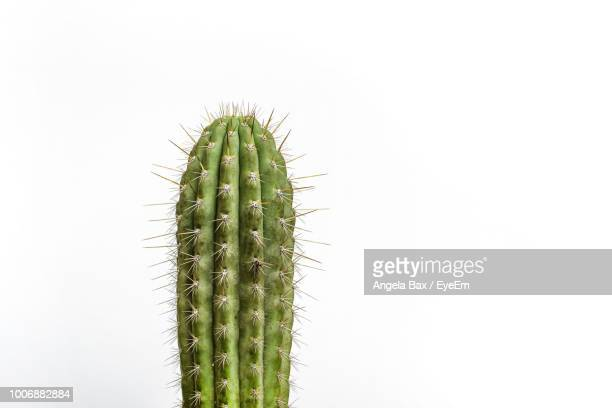 close-up of cactus against white background - cactus fotografías e imágenes de stock