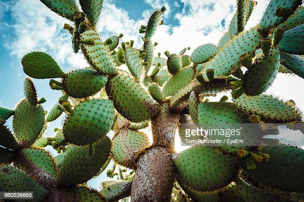 Close-Up Of Cactus Growing On Sunny Day