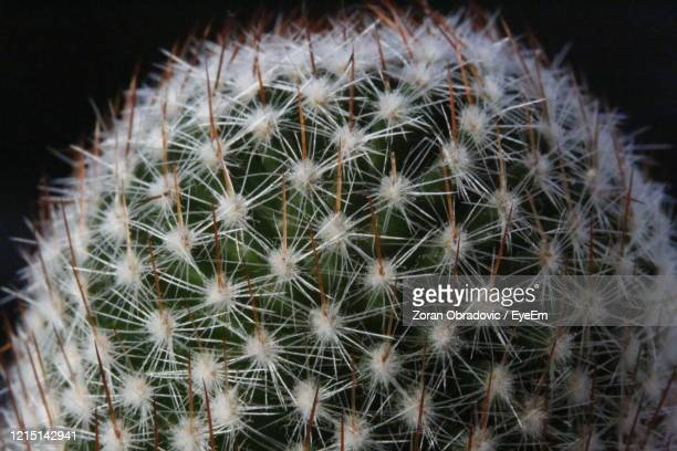 close-up of cactus plant - risk stock pictures, royalty-free photos & images