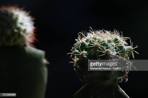 close-up of cactus plant - muhamad nasrun stock pictures, royalty-free photos & images