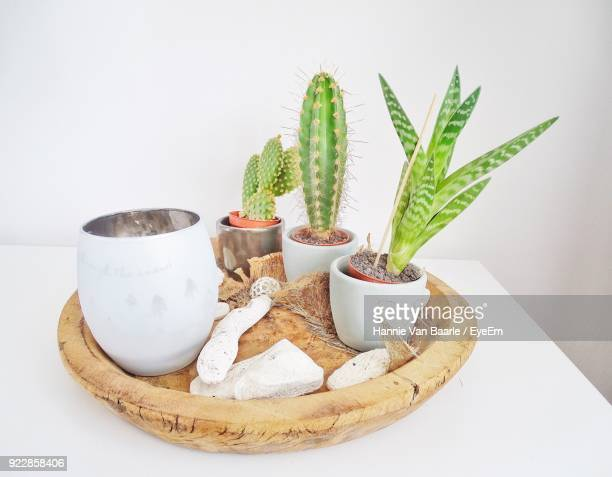 Close-Up Of Cactus Plants On Table Against Wall