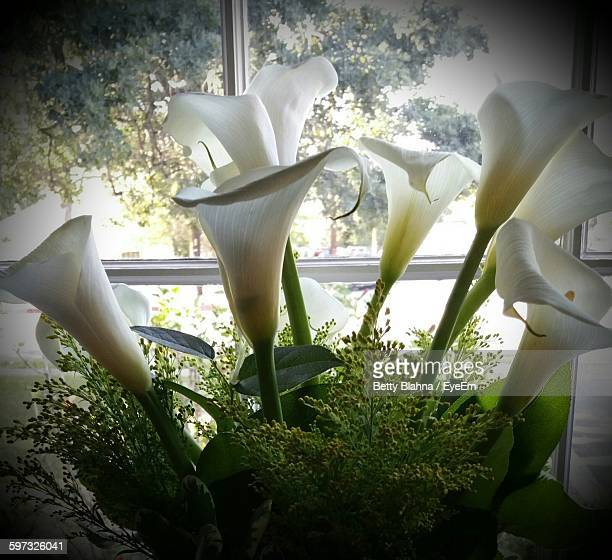 close-up of calla lilies against glass at home - calle foto e immagini stock
