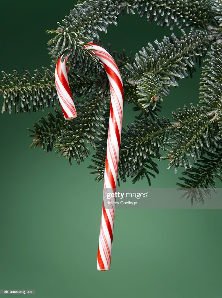 Close Up Of Candy Cane Hanging From Christmas Tree Green Background Stock Photo