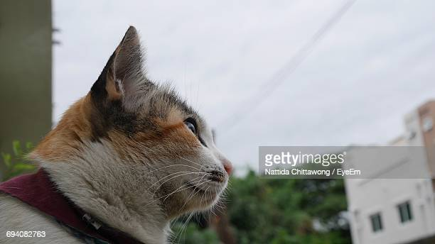 Close-Up Of Cat Against Sky