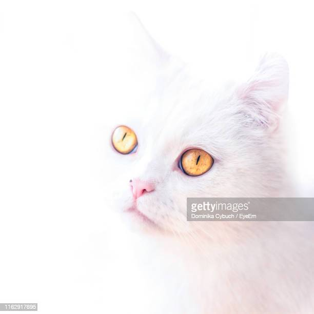 close-up of cat against white background - overexposed stock pictures, royalty-free photos & images