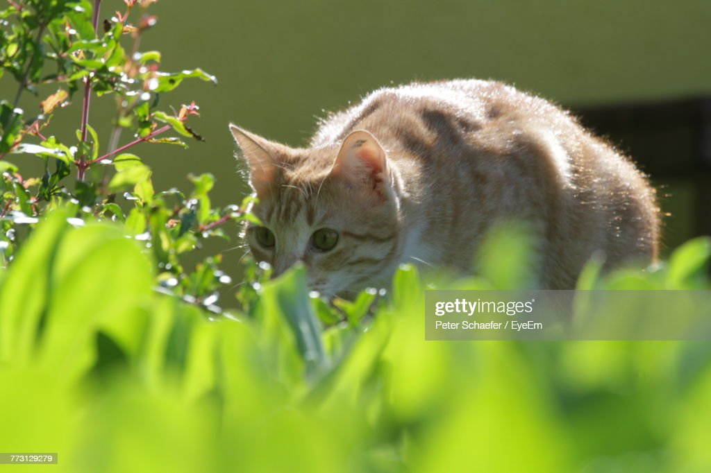 Close-Up Of Cat Amidst Plants During Sunny Day : Photo