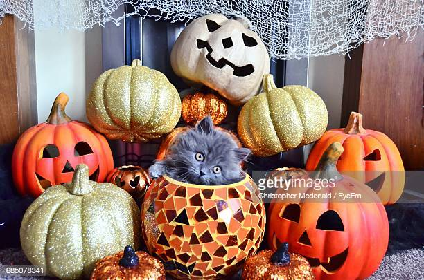 close-up of cat and halloween decorations - halloween cats stock pictures, royalty-free photos & images