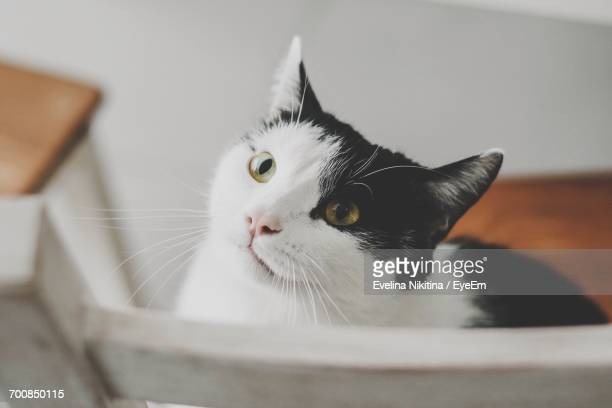 close-up of cat at home - nikitina stock pictures, royalty-free photos & images