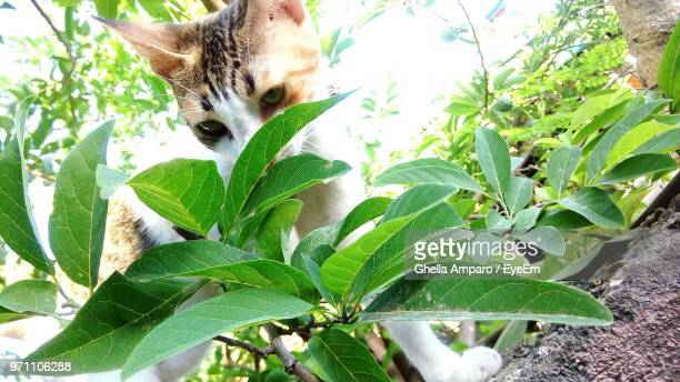 Close-Up Of Cat By Plant