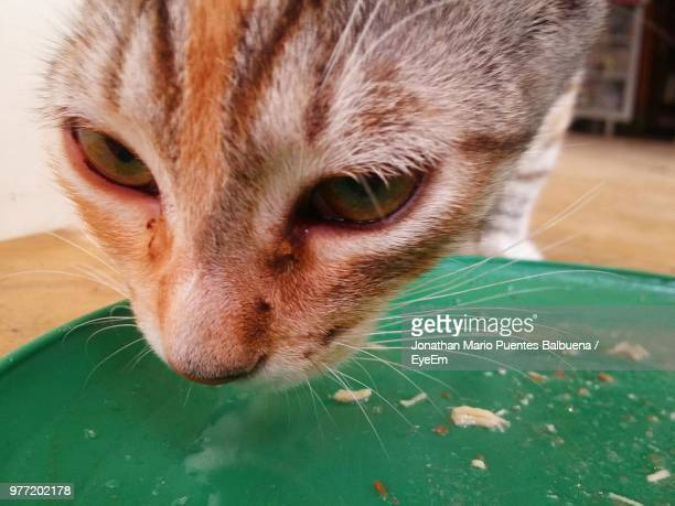 Close-Up Of Cat By Plate
