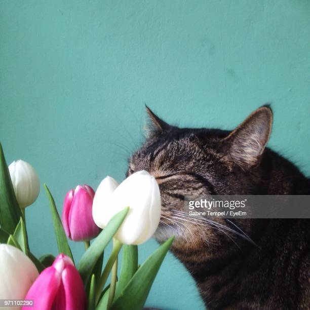 Close-Up Of Cat By Tulips At Home