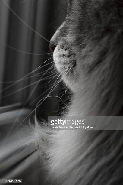 close-up of cat by window - pawed mammal stock pictures, royalty-free photos & images