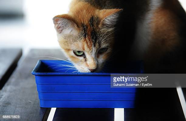 close-up of cat drinking water from container - suhaimi 個照片及圖片檔