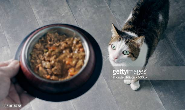 close-up of cat eating food in bowl on table, neu-ulm, germany - neu ストックフォトと画像