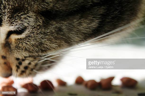 Close-Up Of Cat Eating Food