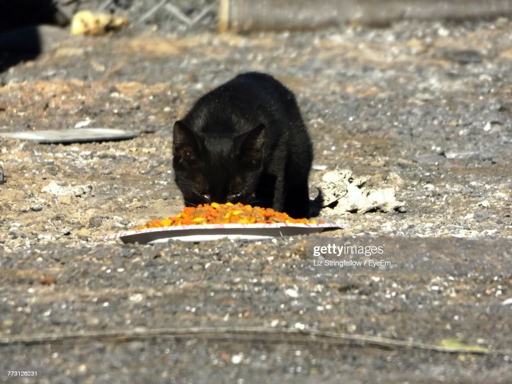 Close-Up Of Cat Eating Food : Photo
