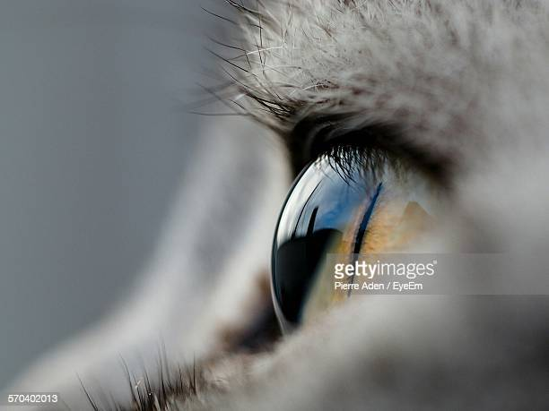 Close-Up Of Cat Eye