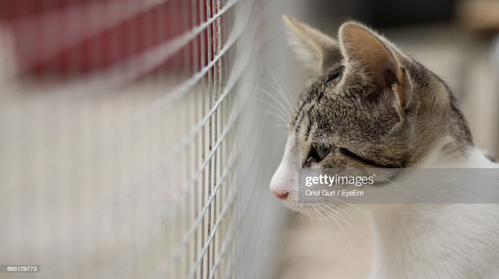 Close-Up Of Cat For Sale In Shelter : Stock Photo