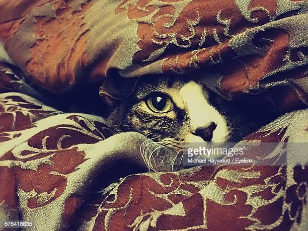 close-up of cat hiding under blanket on bed - cat hiding under bed stock pictures, royalty-free photos & images