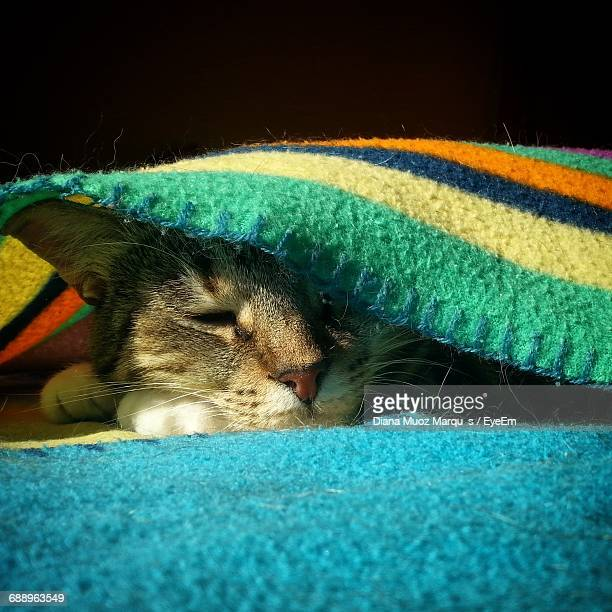 close-up of cat hiding under blanket - cat hiding under bed stock pictures, royalty-free photos & images