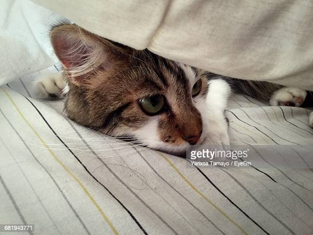close-up of cat hiding under pillow on bed - cat hiding under bed stock pictures, royalty-free photos & images