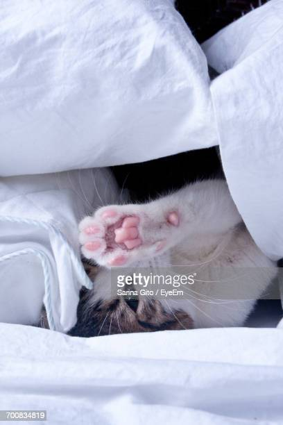 Close-Up Of Cat In Bed