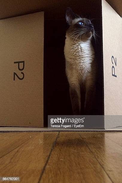 Close-Up Of Cat In Box