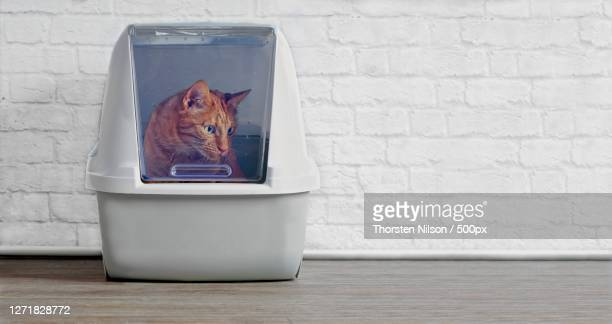 close-up of cat in container by container on table against wall, neu-ulm, germany - neu stock pictures, royalty-free photos & images