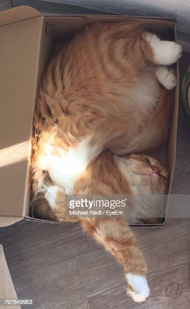 Close-Up Of Cat In Shoebox